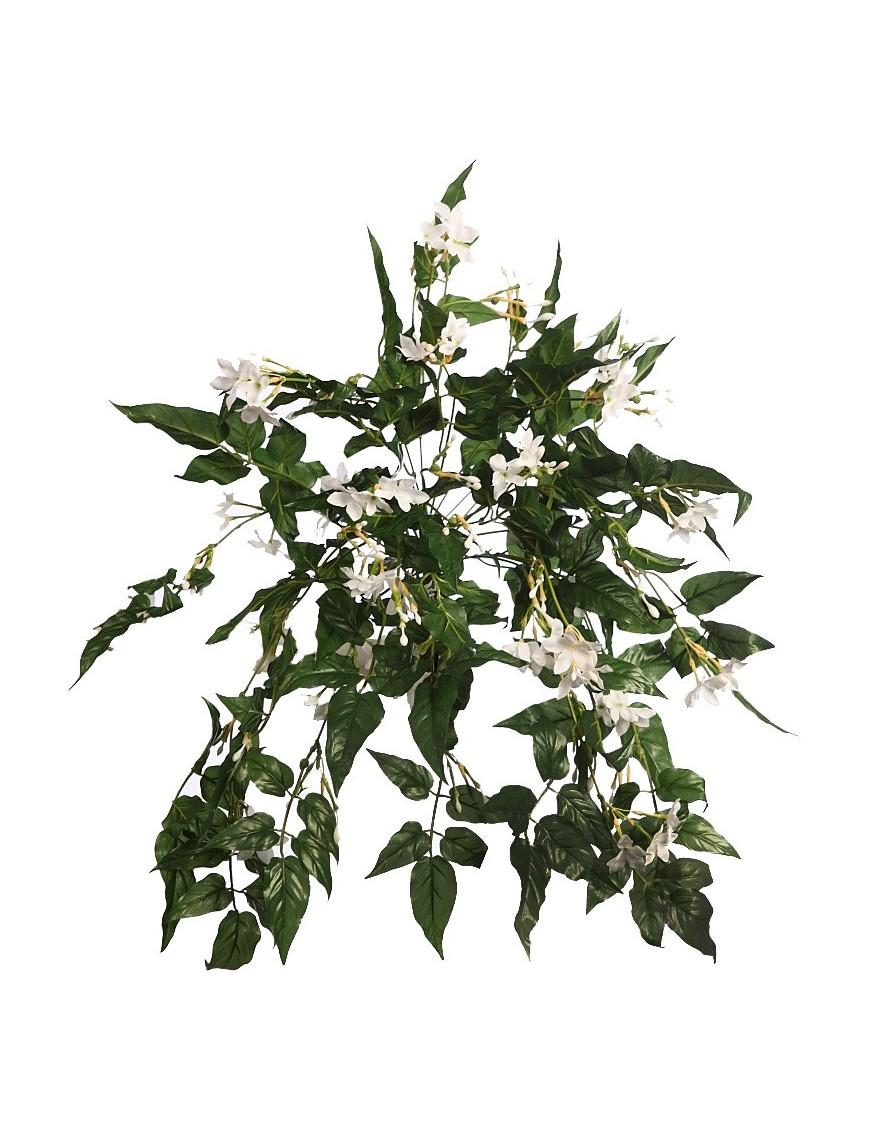 Mata jazmin 60 cm for Jazmin planta precio