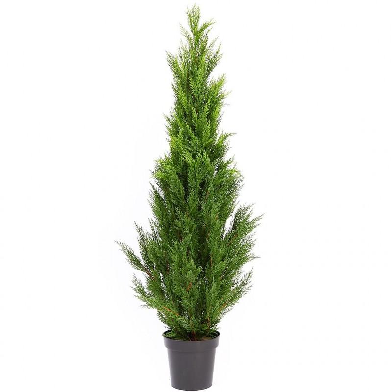 Planta tuya 180 cm en maceta - Plantar en maceta ...