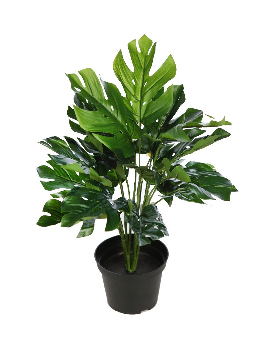 PLANTA CON MACETA MONSTERA 45CM