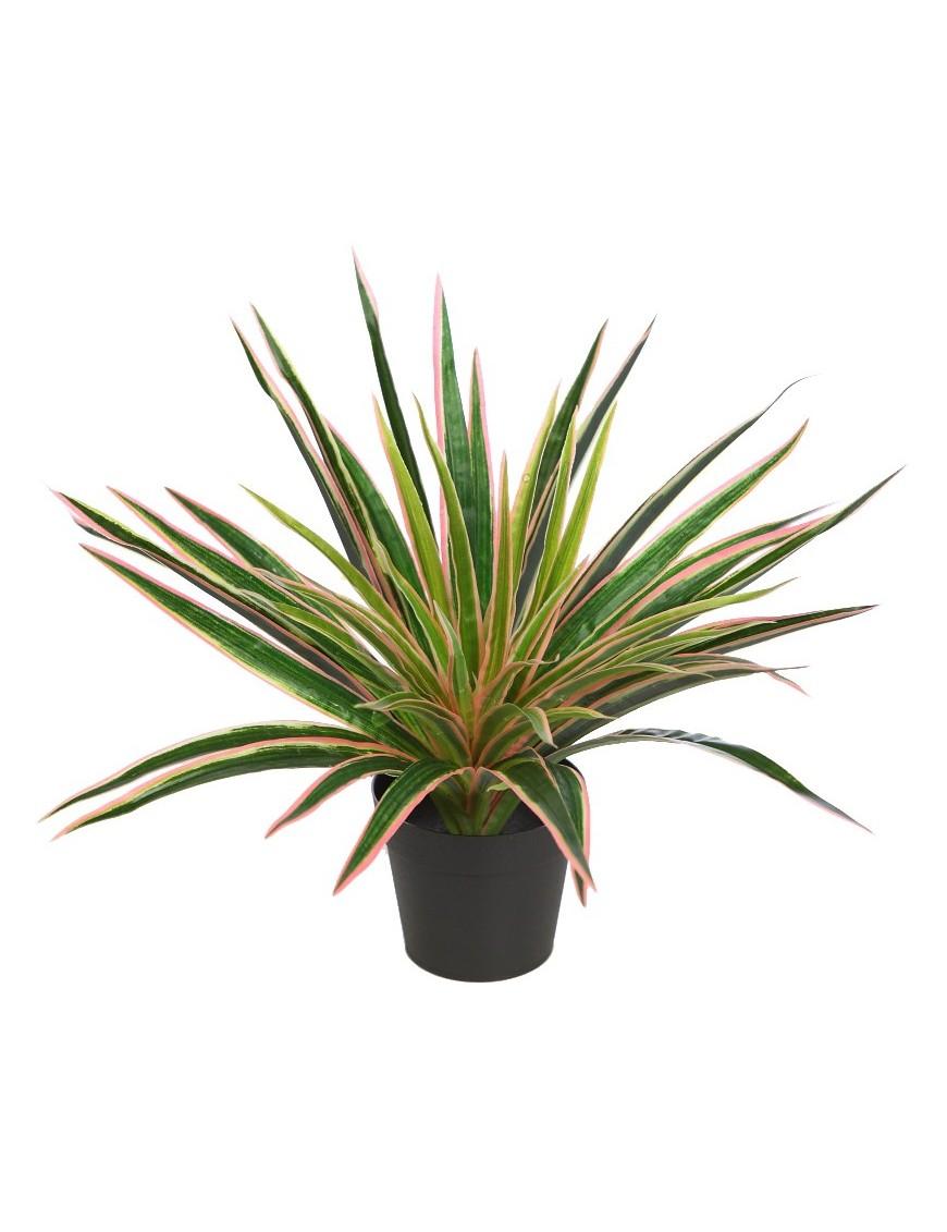 Planta en maceta yuca 35cm for Planta yuca exterior