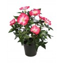IMPATIENS ARTIFICIAL 32CM EN MACETA