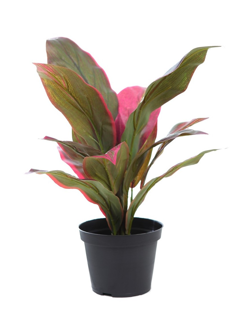 CORDYLINE TACTO NATURAL 45CM EN MACETA