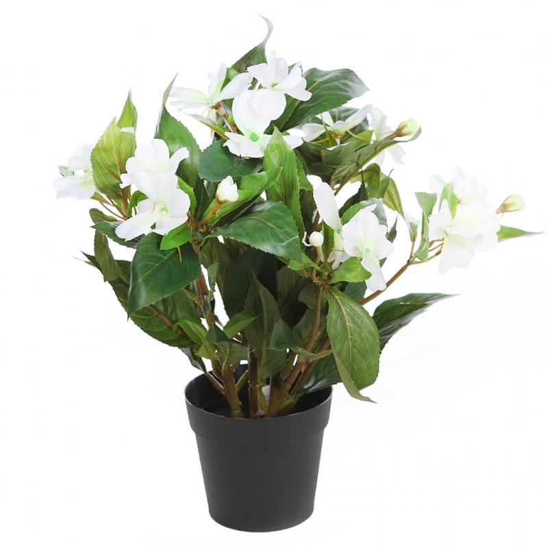 Planta impatients en maceta 30cm - Hierba luisa en maceta ...