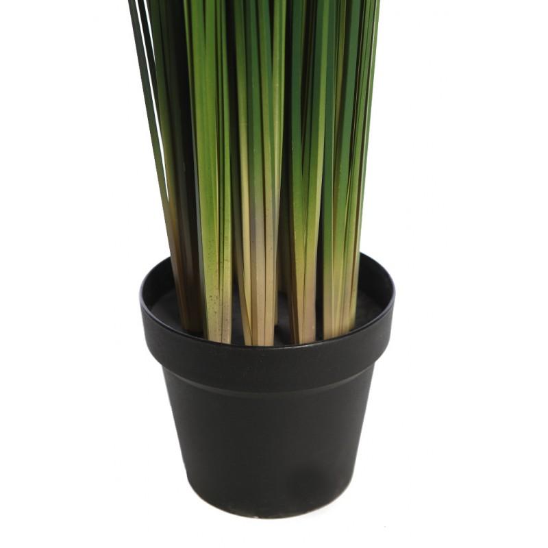 Planta graminea en maceta 110cm - Hierba luisa en maceta ...