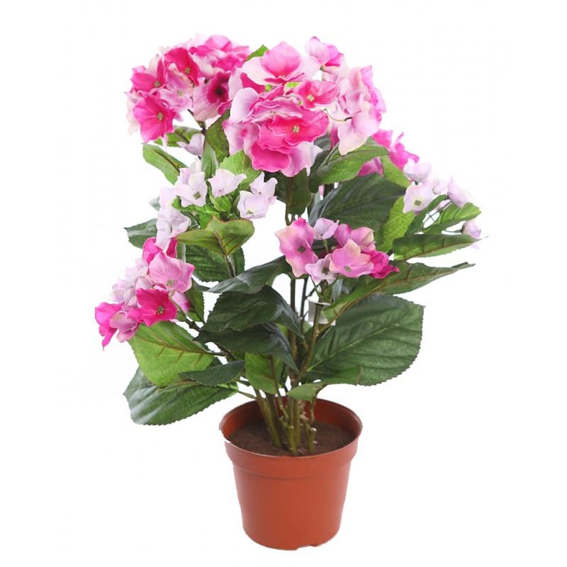 Flores y rboles hortensia for Cuidar hortensias exterior