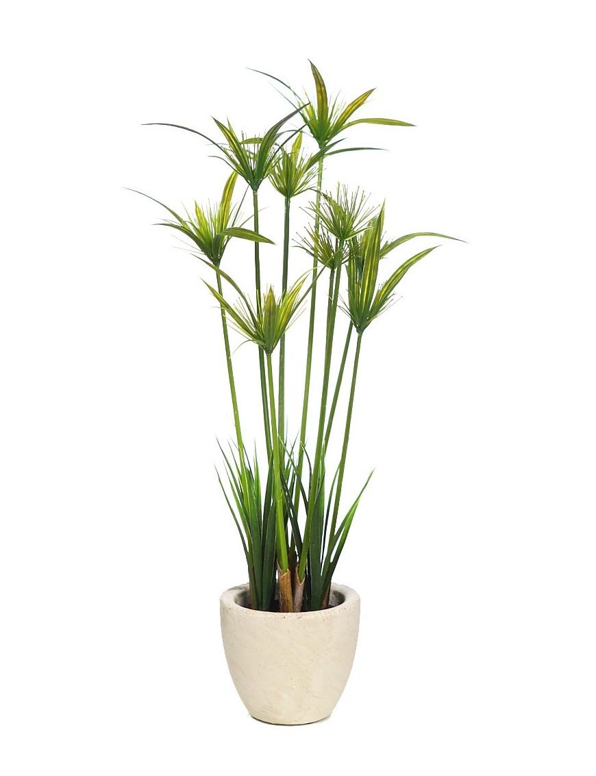 Planta papiro en maceta de cemento 50cm for Plantas en macetas