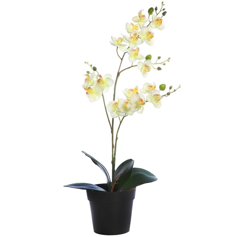 Planta orquidea 50cm en maceta - Plantar en maceta ...