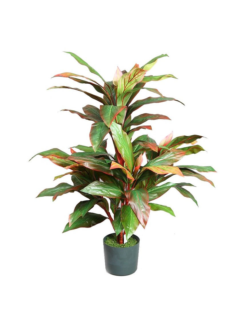 Cordeline planta en maceta 115 cm - Hierba luisa en maceta ...