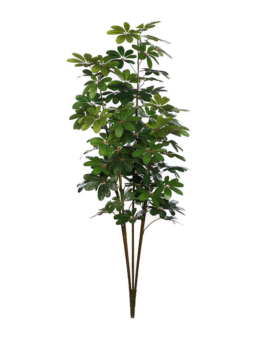 PLANTA CHEFLERA X5 180CM