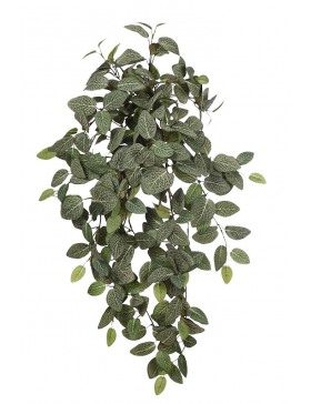 COLGANTE FITONIA ARTIFICIAL 86CM