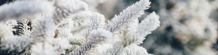 Árboles artificiales blancos.