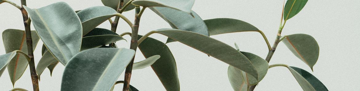 Plantas artificiales para exterior, la guía definitiva