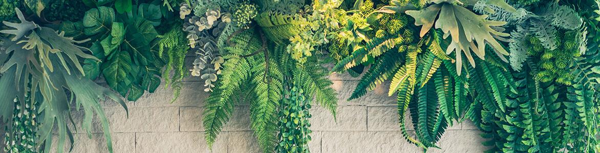 Plantas y flores para decorar jardines
