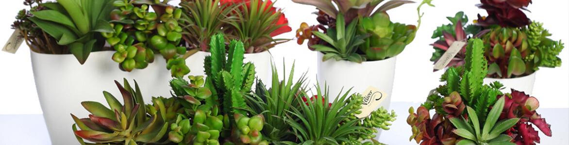 Decorar con plantas crasas o suculentas