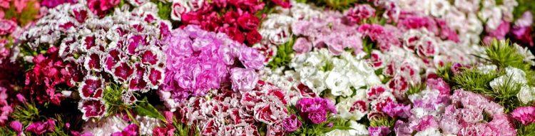 ¿Cuál es el significado de las flores?