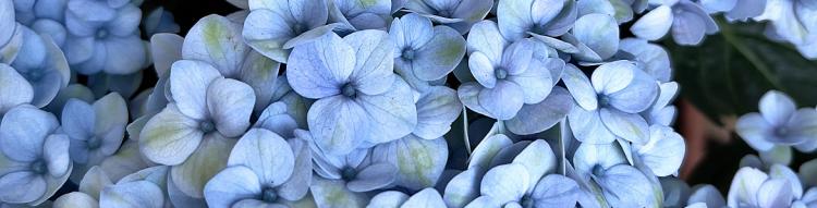 Decoración con flores típicas de primavera