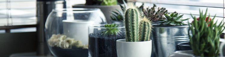 ¿Cómo cuidar las plantas artificiales de interior?