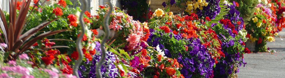Plantas de exterior con flores