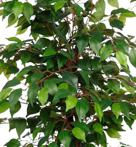 Ficus artificiales baratos